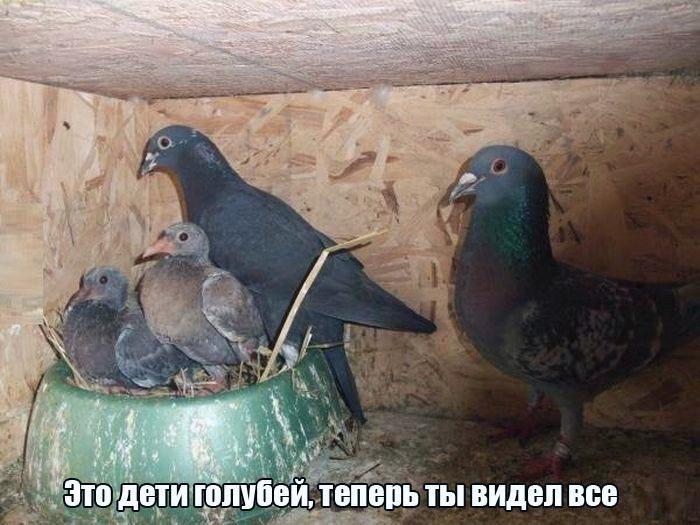 Фото голубей с детьми